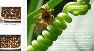 algarve-seedbank-spiraltendenz-bohnen-mandala-graffiti-coevolution-insekt