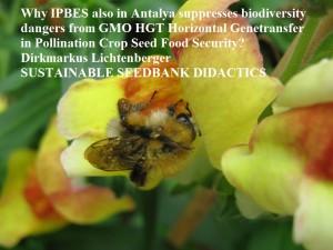 ipbes-antalya-gmo-hgt-pollination-food-security-bee-security-dirkmarkus-lichtenberger-sustainable-seedbank-didactics-antirrhinum-snapdragon-gmo-bee-security