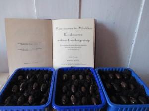 Jospeh Beuys 7000 Rosenkreuzer Eichen Rudolf Steiner Baumschule Dirkmarkus Lichtenberger