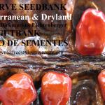 algarve-seedbank-mediterranean-dryland-saatgutbank-banco-de-sementes-dirk-markus-lichtenberger (2)