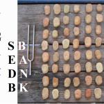 algarve-soundecology-i-ing-i-ching-seedbank-saatgutbank-banco-de-sementes-dirkmarkus-lichtenberger-8x8-bohne