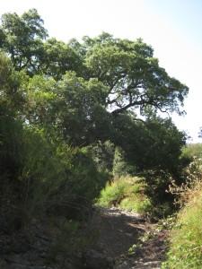 sobreiro-naturdenkmal-korkeiche-cerca-dos-pomares-aljezur-bruecke