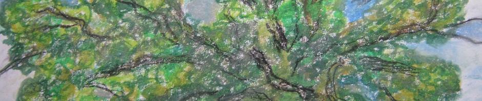 eiche-oak-carvalho-algarve-dirkmarkus-lichtenberger-freestyl